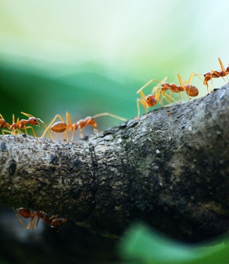 Surface & Fire Ant Control